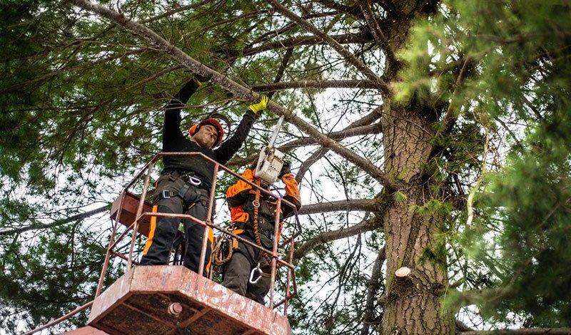 Stockton Arborist Service