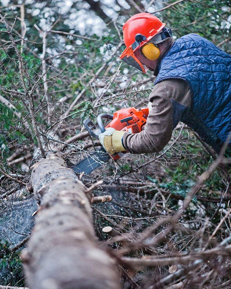 Stockton Arborist