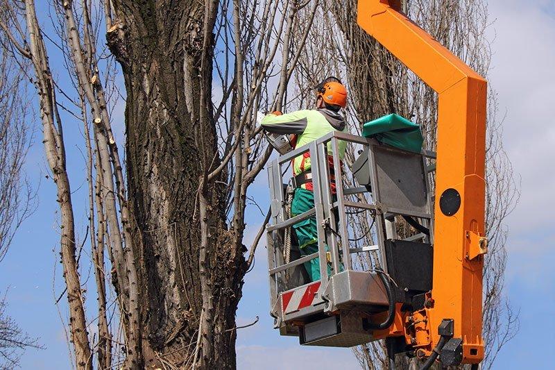 Folsom Tree Service Experts