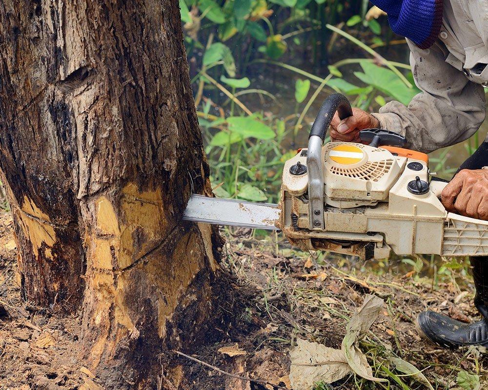 Elk Grove Tree Service Experts