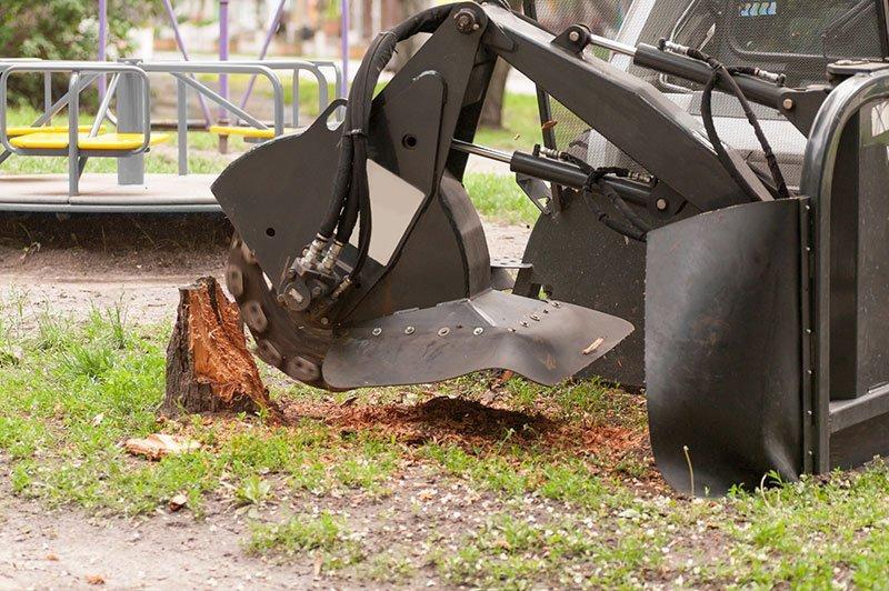 Stockton Tree Experts